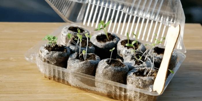 Plastic Container Mini Greenhouse
