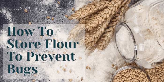 How To Store Flour To Prevent Bugs