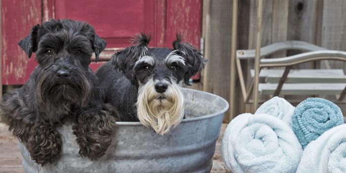 Ranch Hand Amish Bar Soap-Dog Shampoo