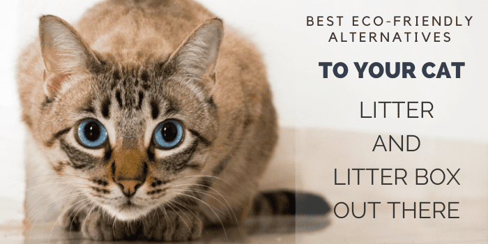 Best Eco-Friendly Alternatives to Your Cat Litter and Litter Box Out There